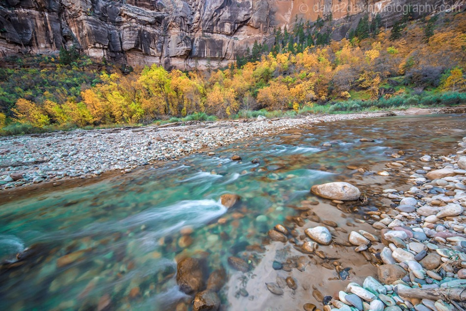Fall colors have arrived at Zion National park along the Virgin River