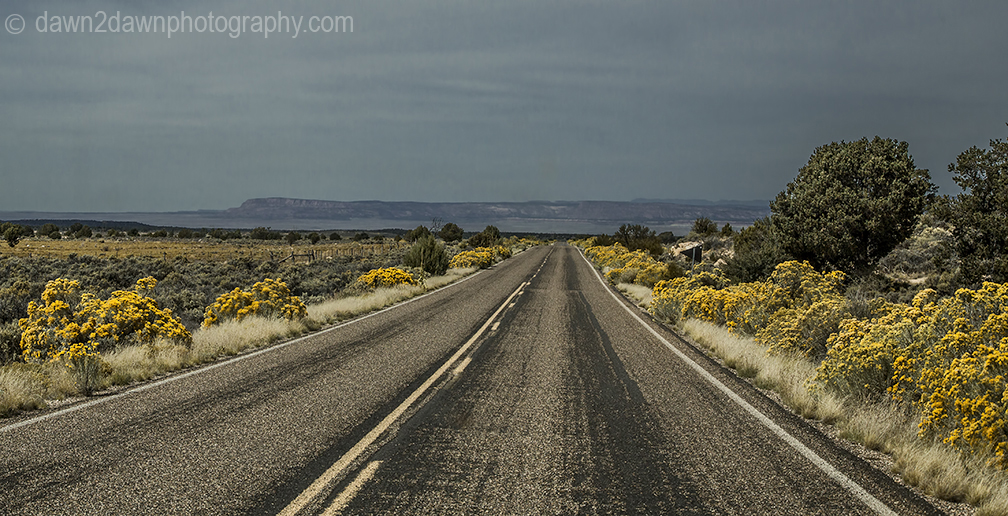 Rabbitbrush lines a Northern Arizona Highway during autumn