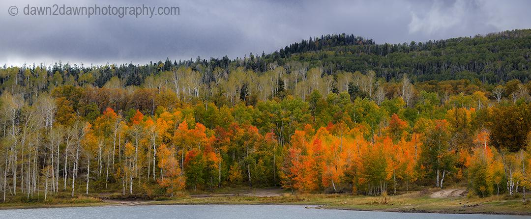 Fall colors have arrived at Kolob Reservoir near Zion National Park, Utah
