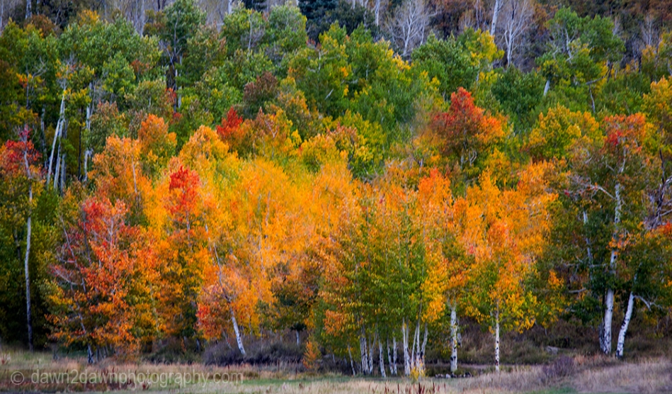 Fall colors have arrived at Kolob Reservoir near Zion National Park, Utah