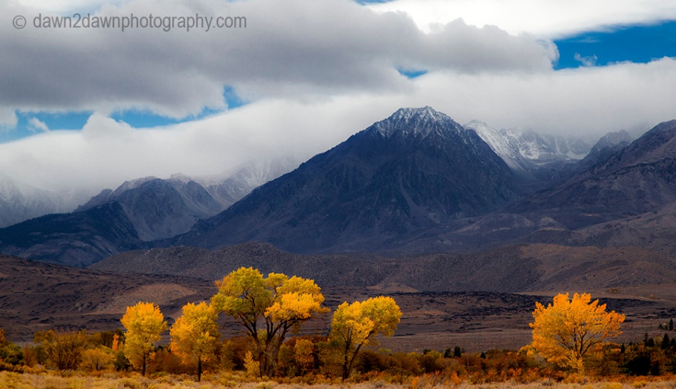 Fall colors have arrived at Owens Valley in California