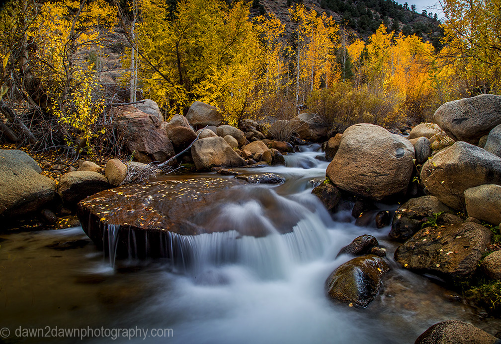 Fall colors have arrived to the Sierra Neveda Mountains along Bishop Creek adjacent to Owens Valley, California