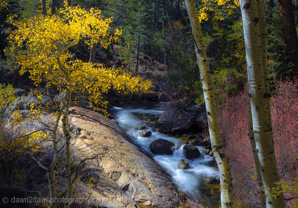 Fall colors have arrived in the Sierra Nevada Mountains along Lee Vining Creek, California