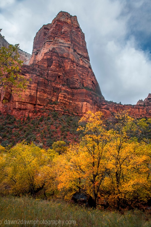Fall colors have arrived at Zion Canyon at Zion National Park, Utah