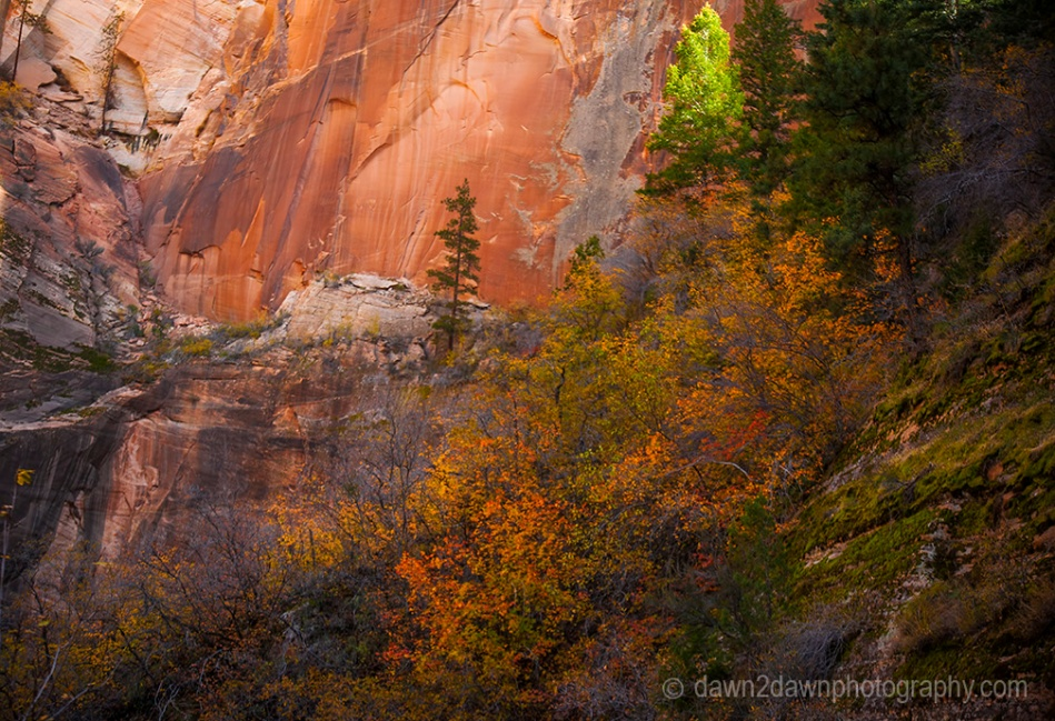 Fall colors have arrived at Echo Canyon at Zion National Park, Utah