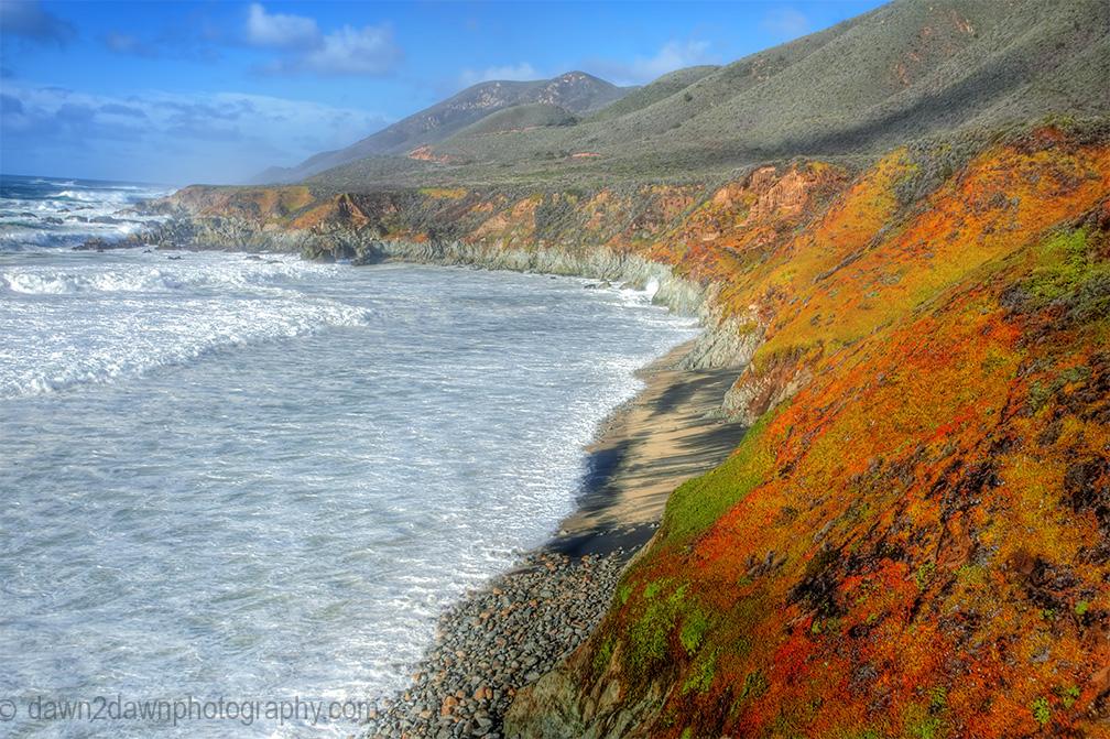 Cal Coast Ice Plant_9316