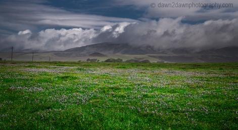 Flowers bloom along the California Coastline near San Simeon