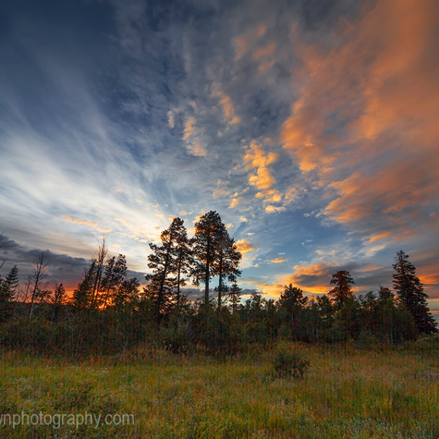 The sun sets behind the pine tree forests of Kaibab National Forest, Arizona