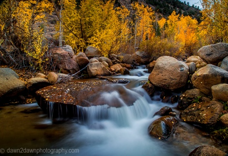 Fall colors have arrived to the Sierra Nevada Mountains along Bishop Creek adjacent to Owens Valley, California
