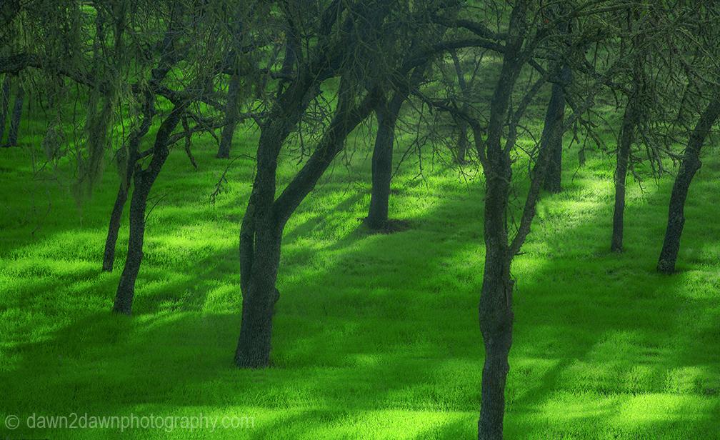 Cal Rural Trees_0869