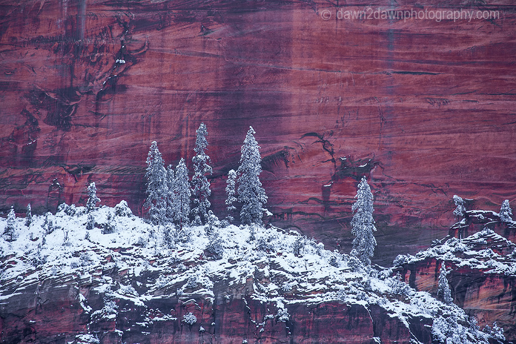 Fresh snow has fallen during winter at Zion Canyon at Zion National Park