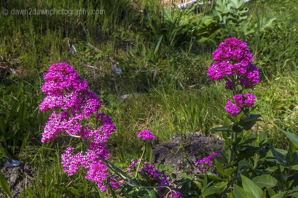 Cal Coast Flowers_8431