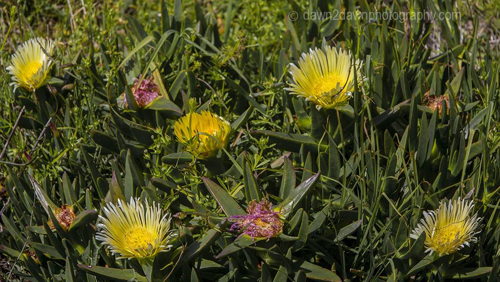 Cal Coast Flowers_9346