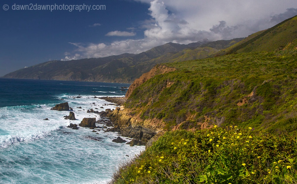 Flowers grow along California's Pacific Ocean Coast south of Big Sur.