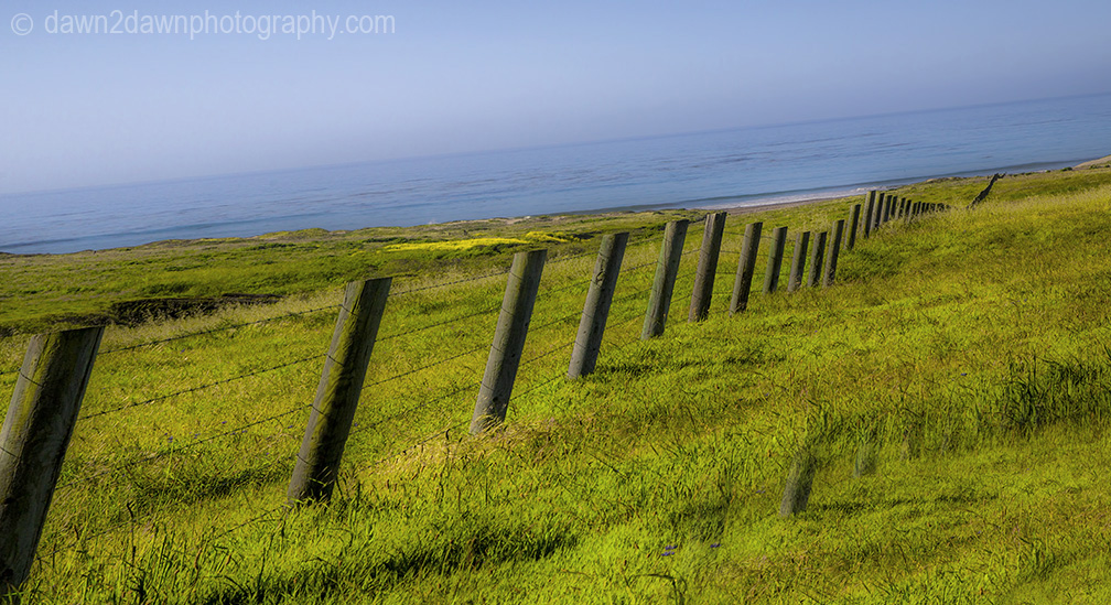 A fence dissects a pasture along the California Pacific Ocean Coast near San Simeon