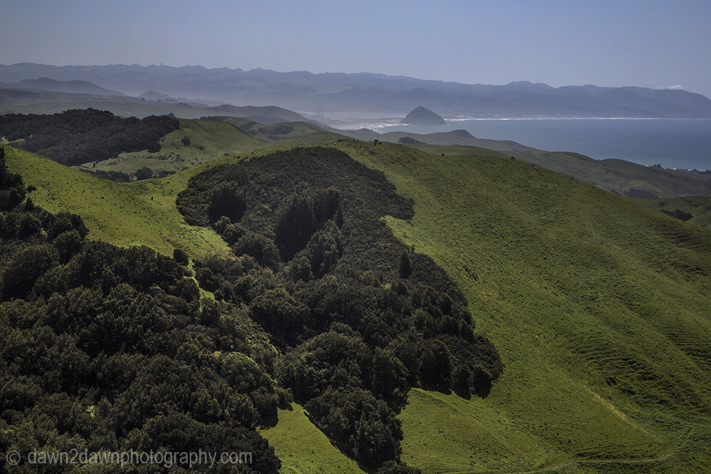 Spring rains have brought green grasses to the pastures along California's Pacific Ocean Coastline near Moro Bay
