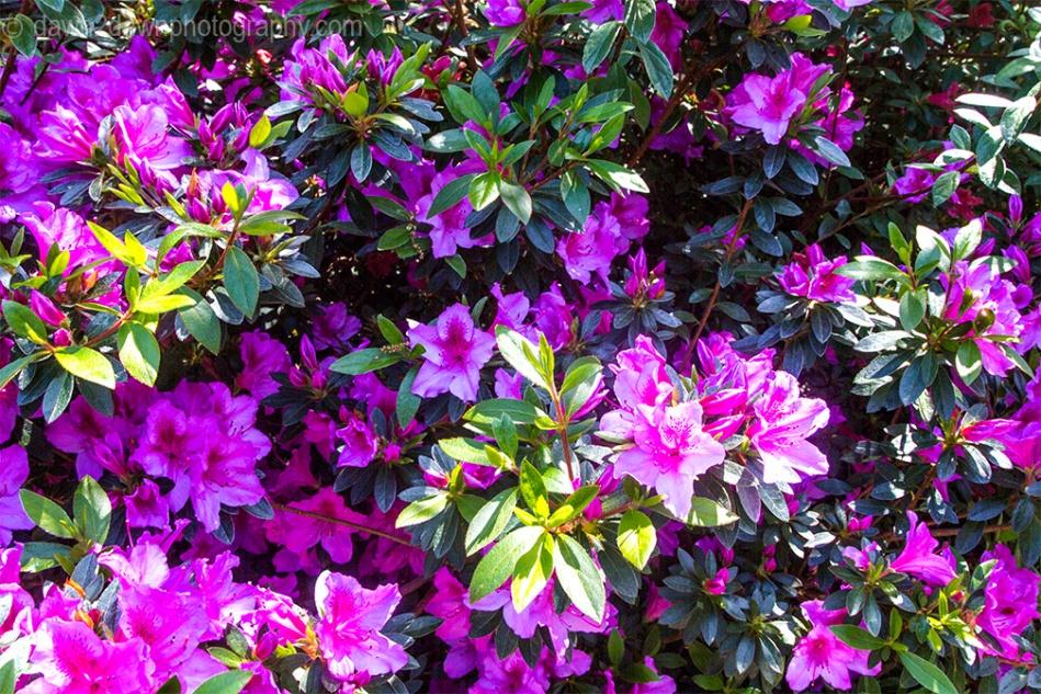 Hearst Flowers_9089
