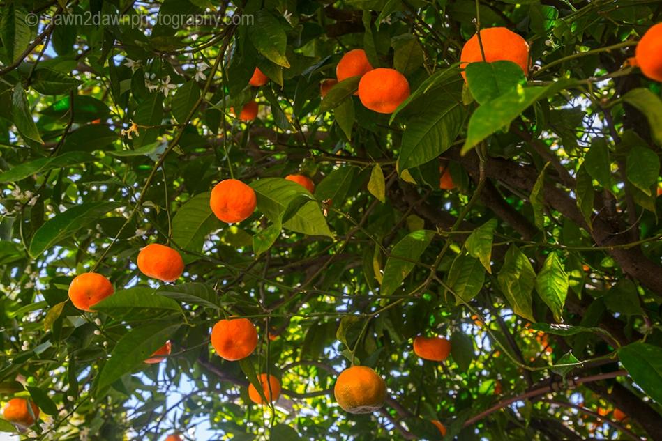 Hearst Fruit_9025