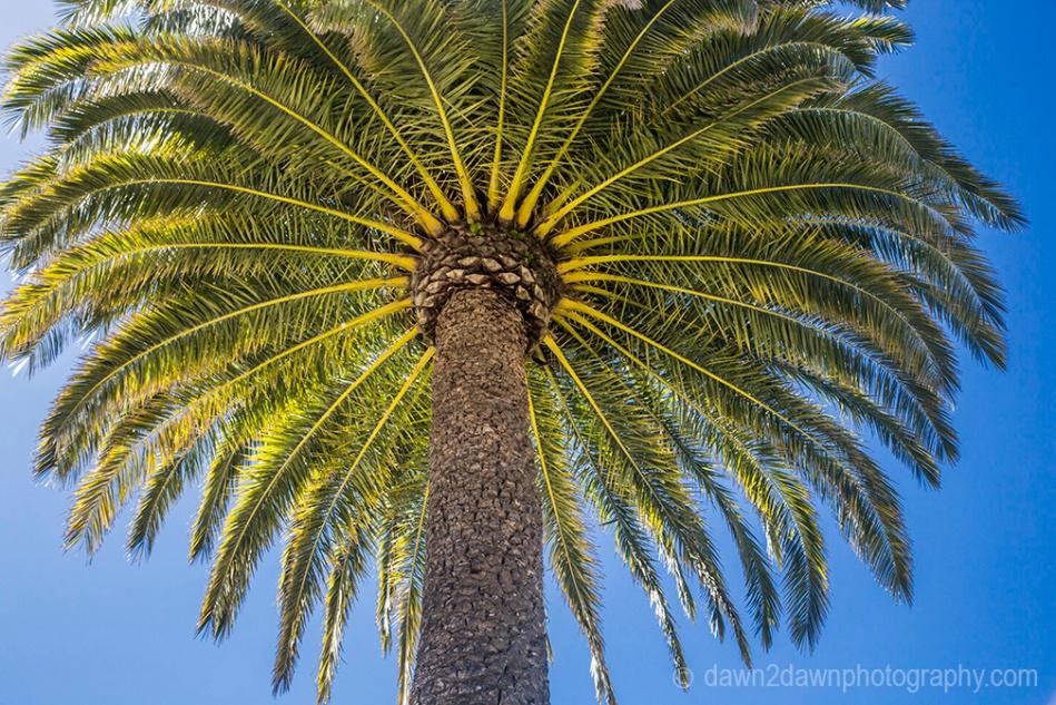 Hearst Palm_9030