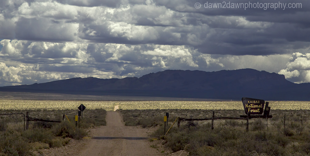A backcountry road leads you through the Kaibab National Forest to Marble Canyon at Grand Canyon National Park, Arizona