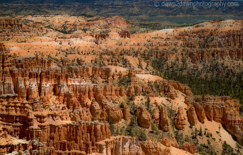 The hoodoos are the predominate feature at Bryce Canyon National Park, Utah
