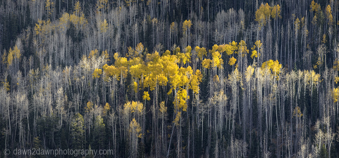 Fall colors have arrived in Cedar Canyon in Southern Utah.
