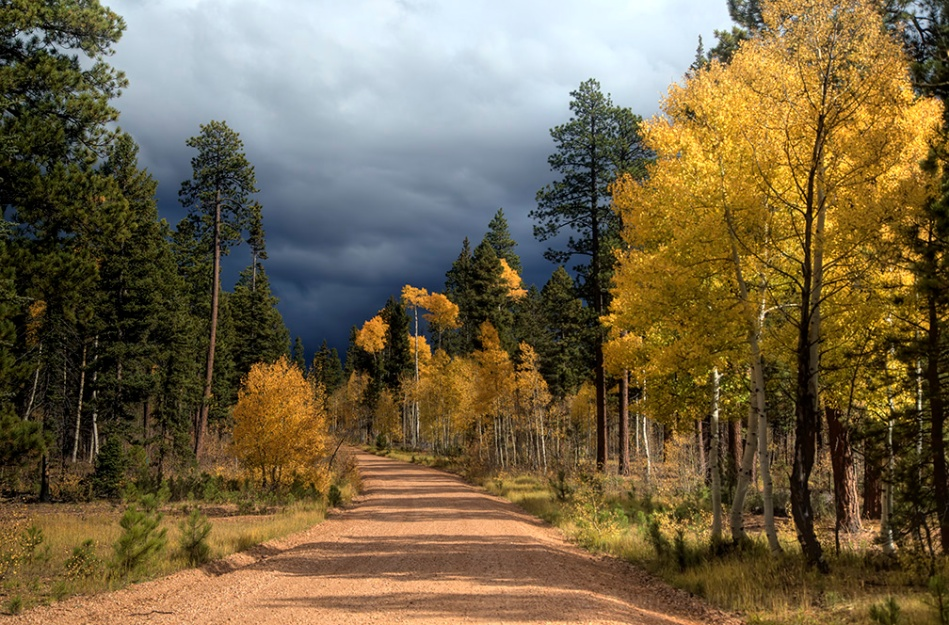 kaibab-fall-colors_3930