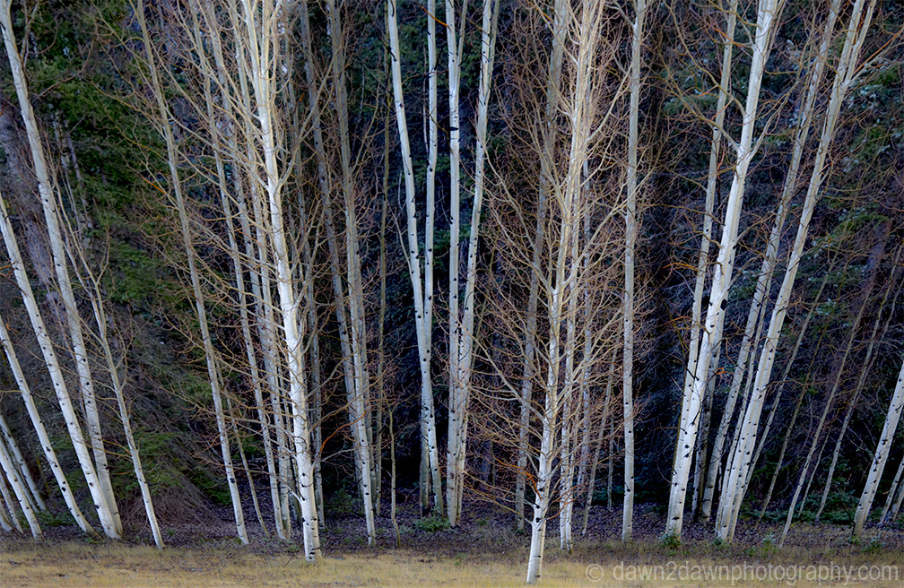 Fall colors have arrived at Kaibab National Forest, Arizona