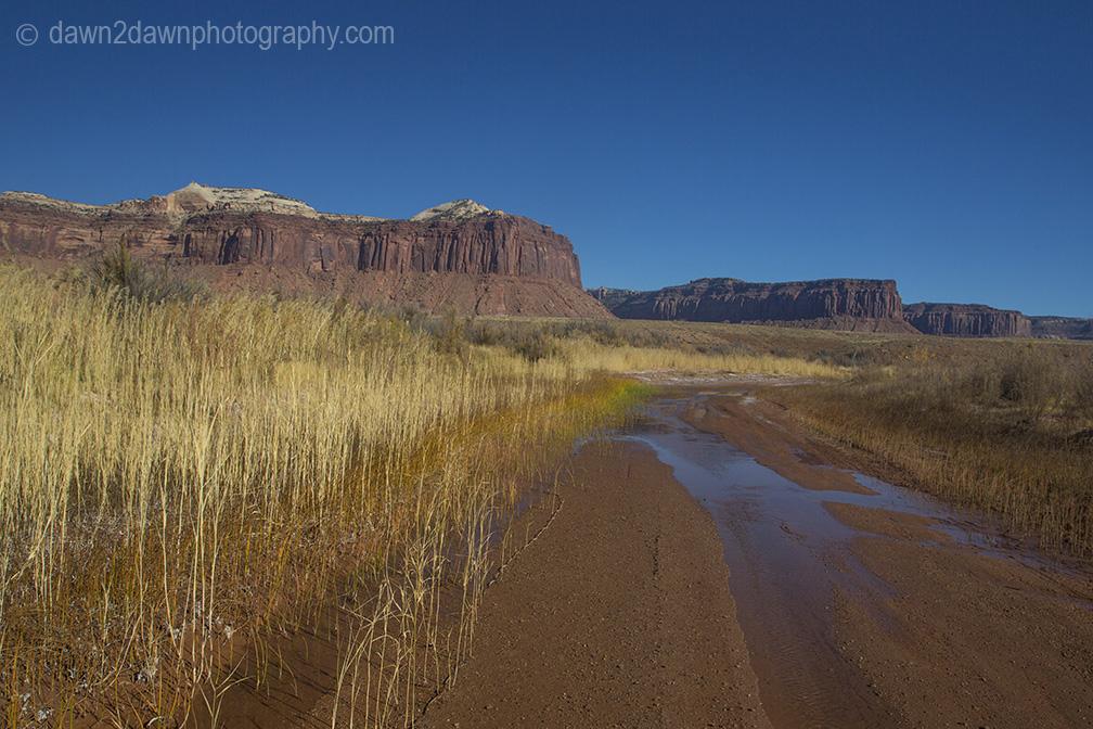 canyonlands-lavendar_6204
