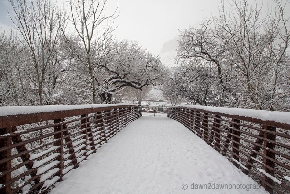 zion-snow-xmas_7941