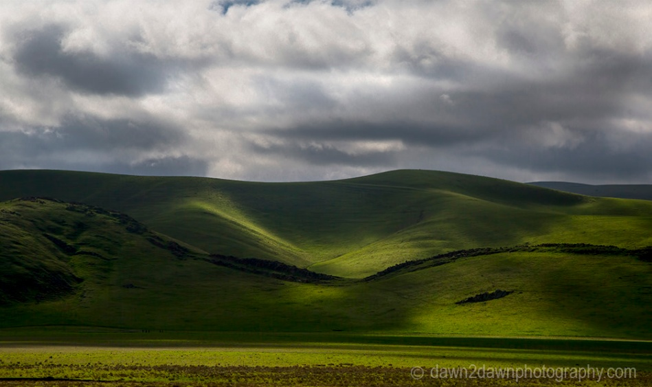 Recent rains have greened up the hills and pastureland in rural California.
