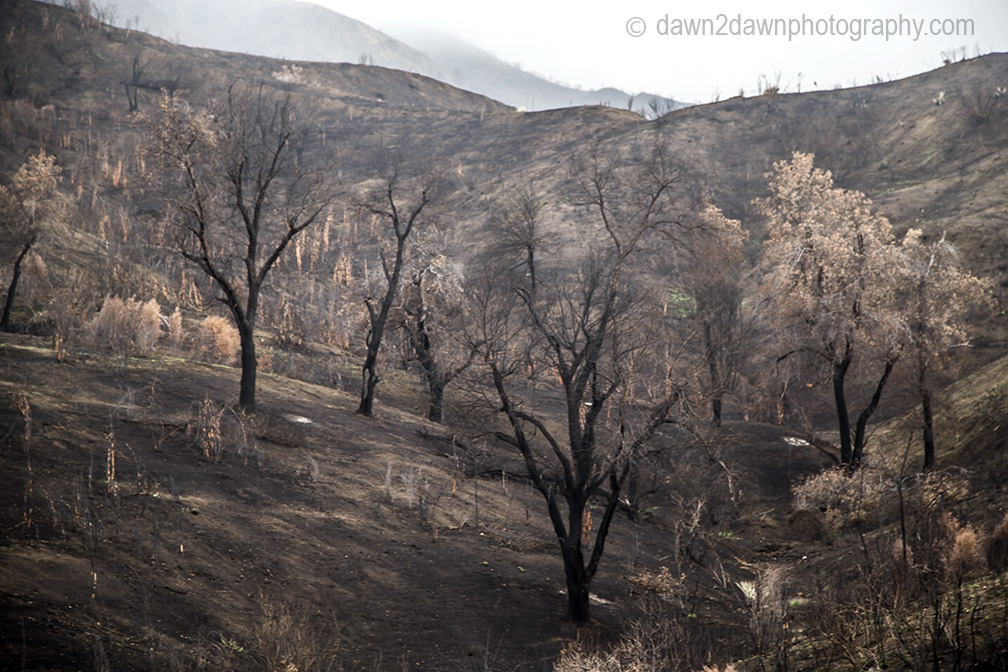 cal-wildfires_8053