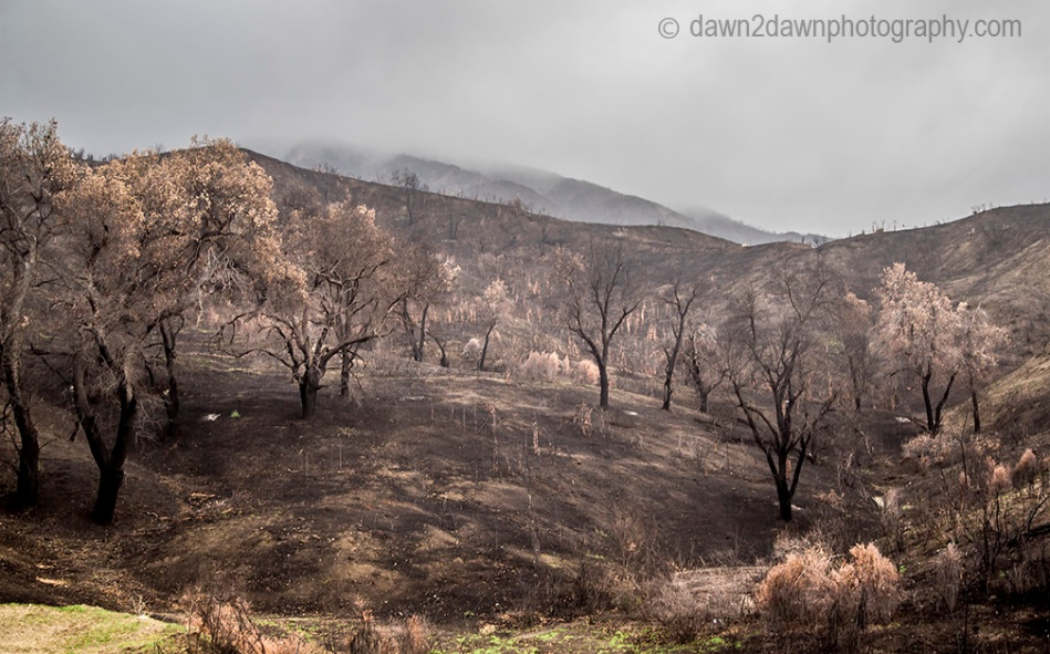 cal-wildfires_8054