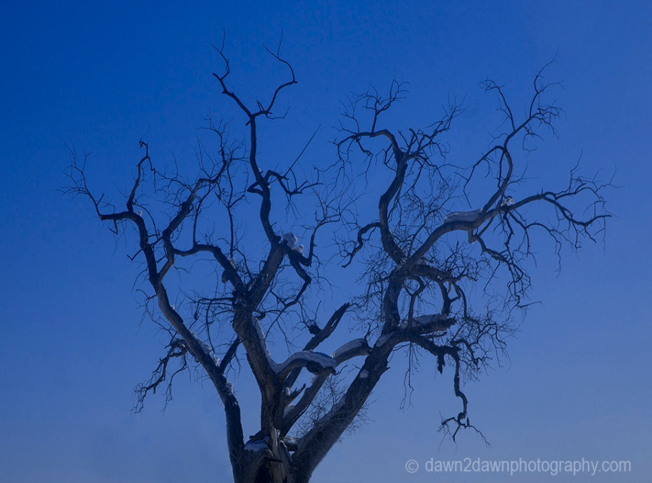 A leaveless cottonwood tree during winter in Southern Utah