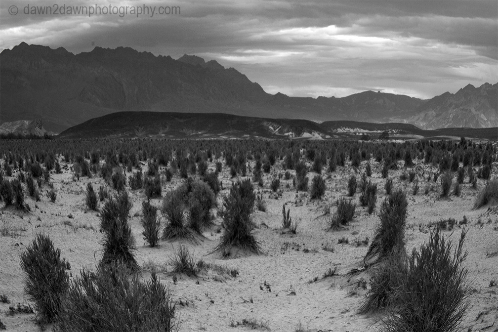 Vegetation grows on the sand dunes at Stovepipe Wells at Death Valley National Park, California