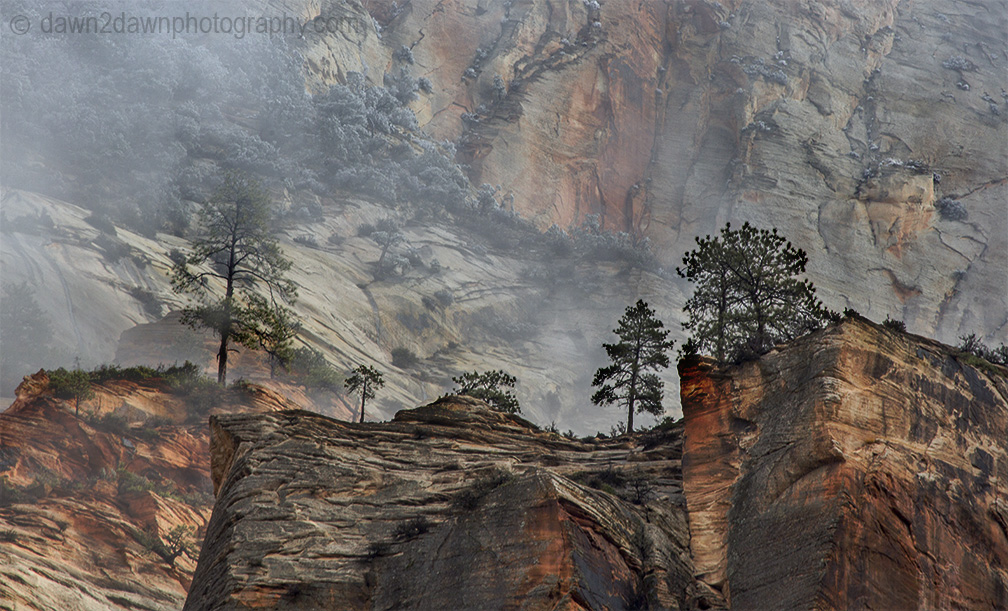 Stormy Zion National Park