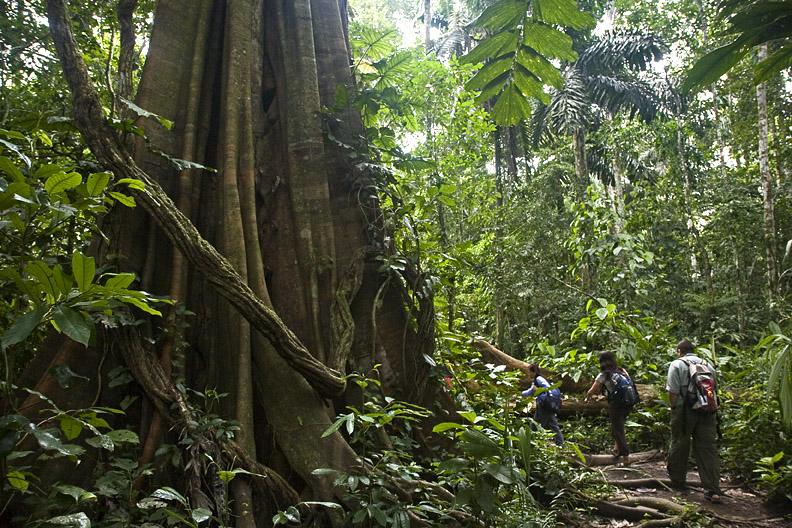 Peruvian Jungle Madness