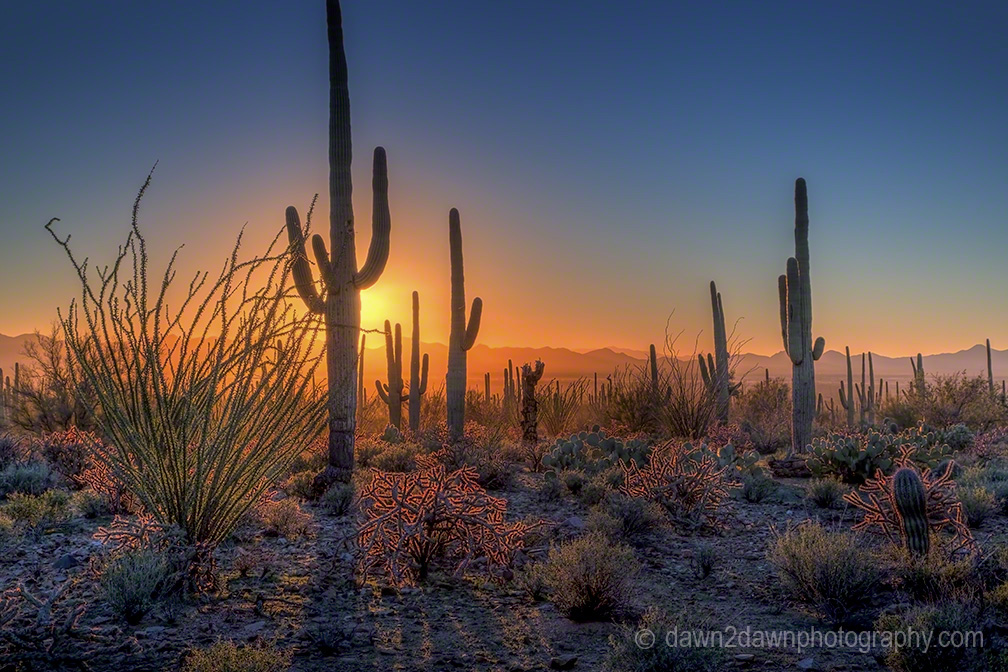 Saguaros Are Cool