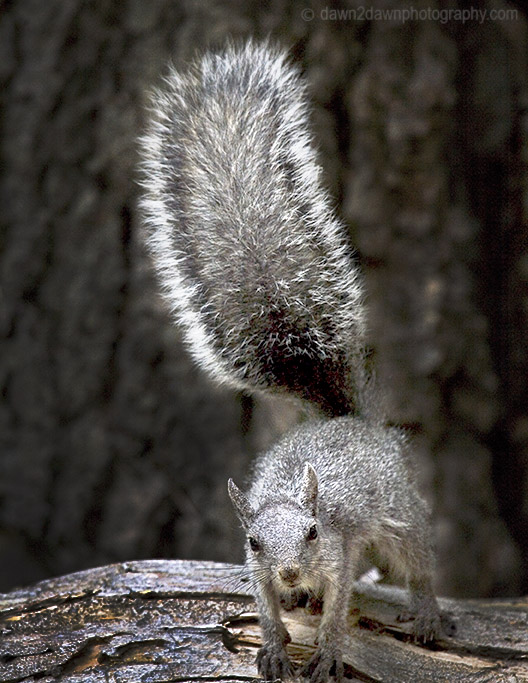 The Tale or Tail Of The Squirrel