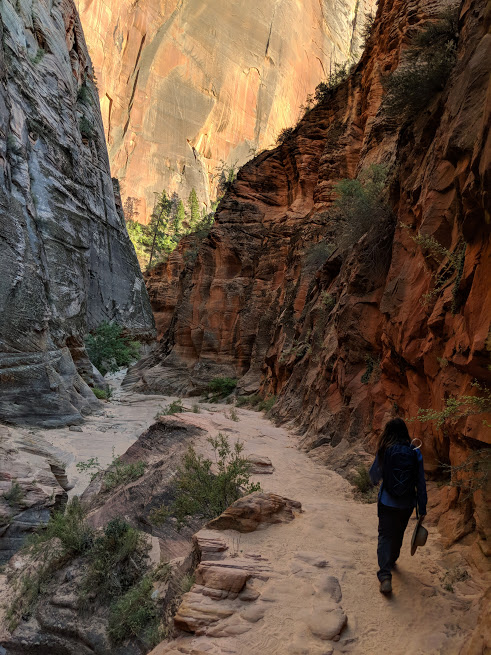 Zion's Observation Point Trail