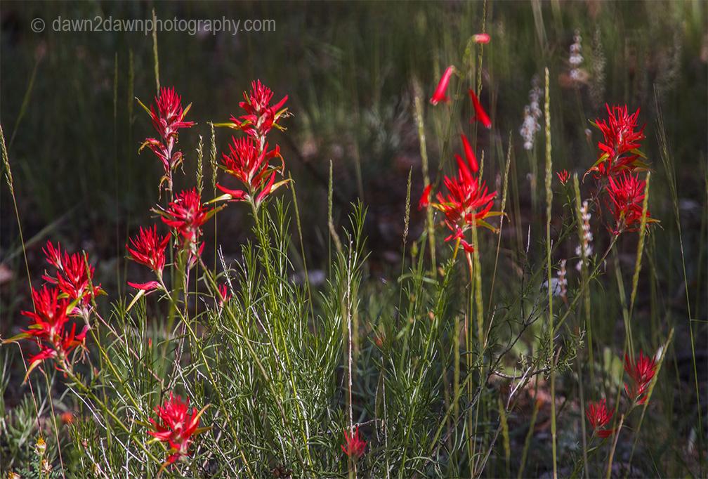 North Rim Flora_43