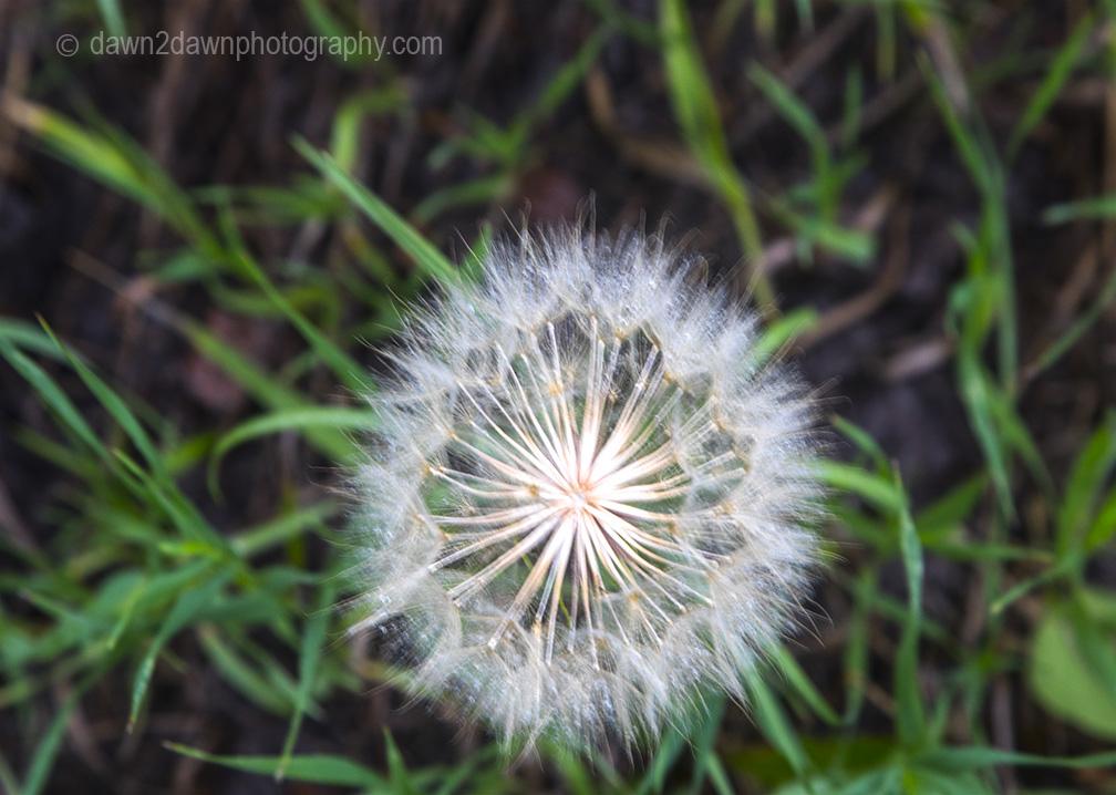 North Rim Flora_56