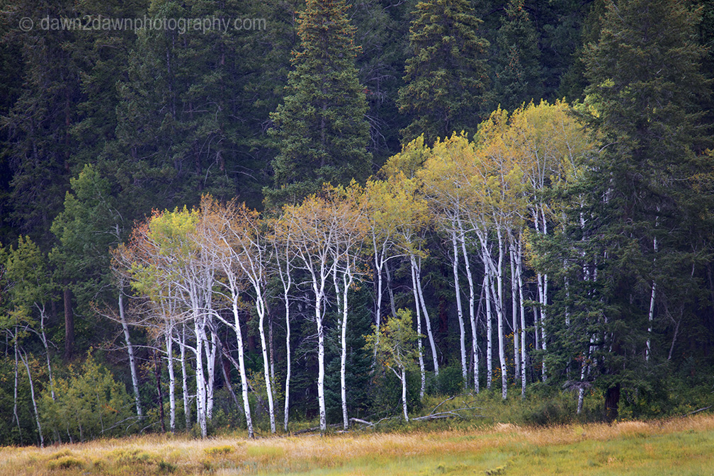 Fall Colors Arriving Late To Colorado This Year
