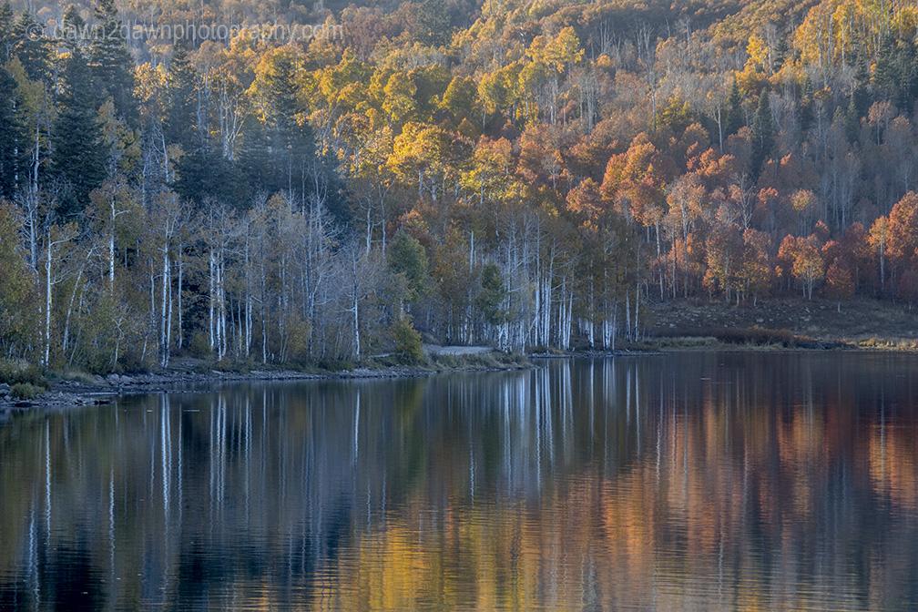 Autumn Colors InReflection