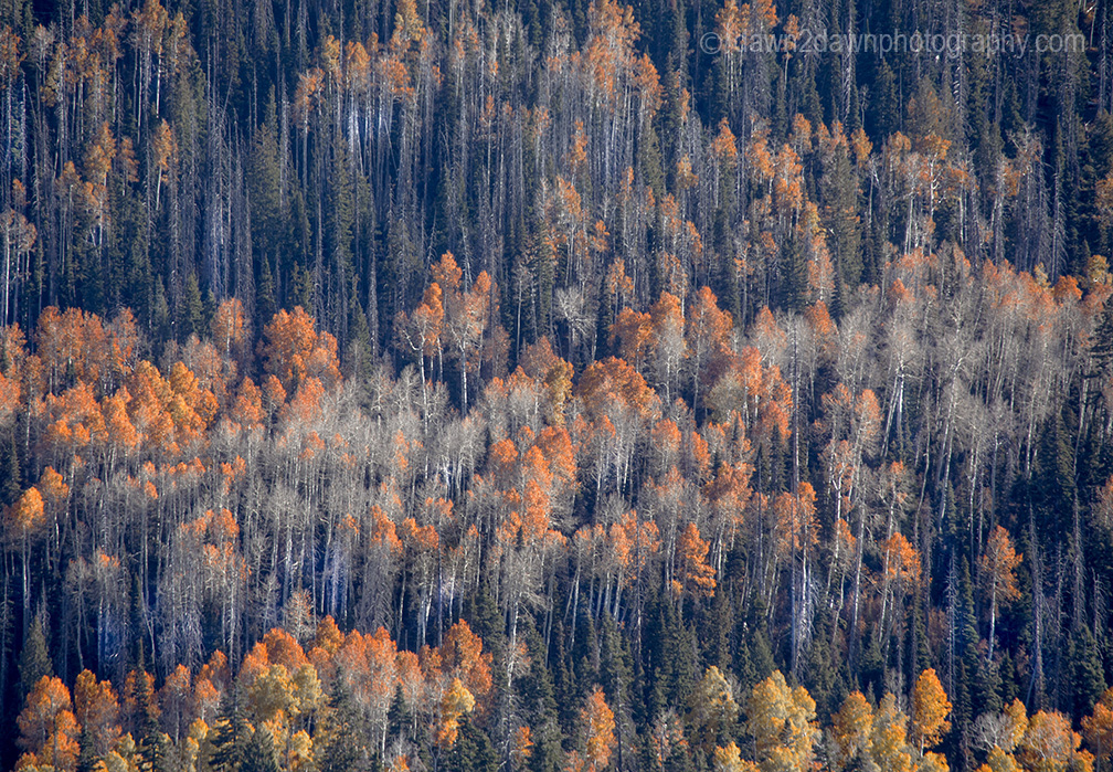 Fall Colors Blazing At Utah's Dixie National Forest