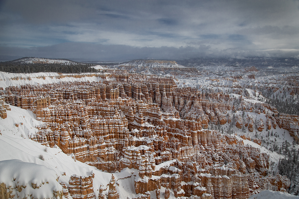 Fresh Snow At Bryce